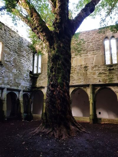 Muckross Abbey  Ireland Ireland🍀 Architecture Built Structure Day Window No People Low Angle View Tree