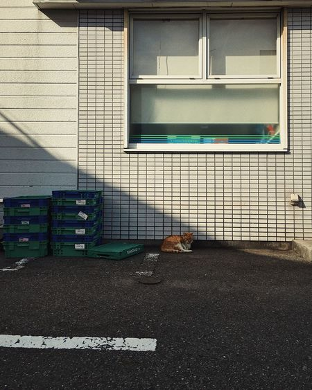 Cat on brick wall