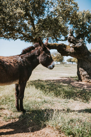 Donkey Donkeys Farm Farm Life Livestock Animal Themes Animal Animals In The Wild Mammal Animal Profile Horse Tree Nature One Animal Plant Domestic Animals Vertebrate Animal Wildlife Domestic Field Pets No People Land Day Sunlight Standing Side View Herbivorous Outdoors Animal Head  Profile View