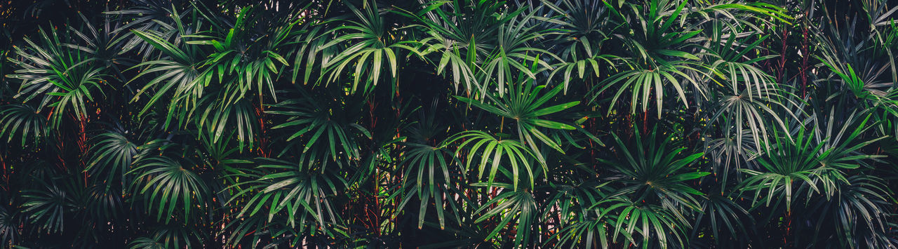 Growth Plant Beauty In Nature Green Color Tree Nature No People Tranquility Leaf Plant Part Land Outdoors Day Forest Close-up Backgrounds Foliage Freshness Full Frame Lush Foliage Bamboo - Plant Rainforest Palm Leaf Green Green Color Greenery Freedom