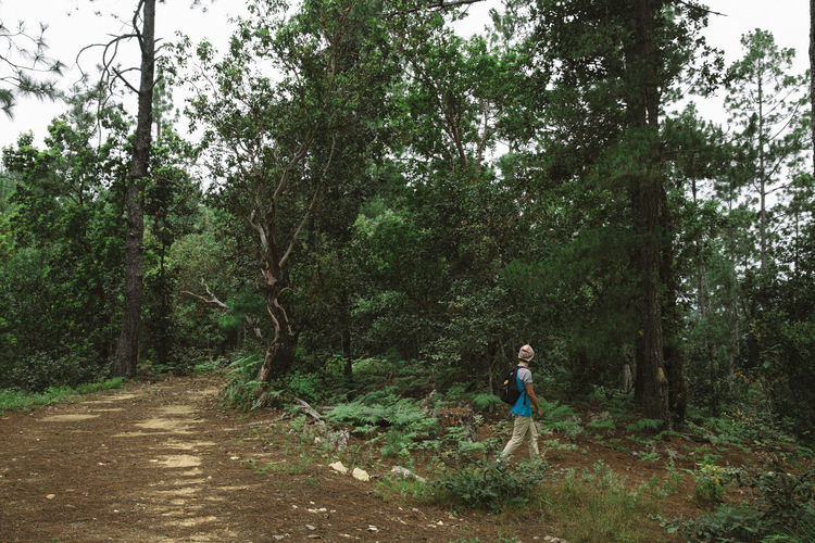 Adult Childhood Day Forest Full Length Growth Hiking Nature Nature One Person Outdoors People Standing Tree