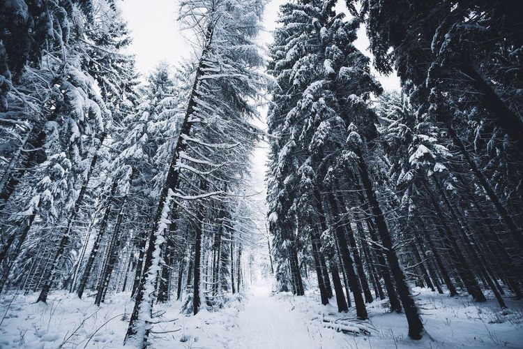 Low angle view of snow covered trees in forest
