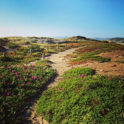 California Path San Francisco Beauty In Nature Clear Sky Day Field Flower Freshness Grass Green Color Growth Landscape Mountain Nature No People Outdoors Plant Scenics Sky Tranquil Scene Tranquility