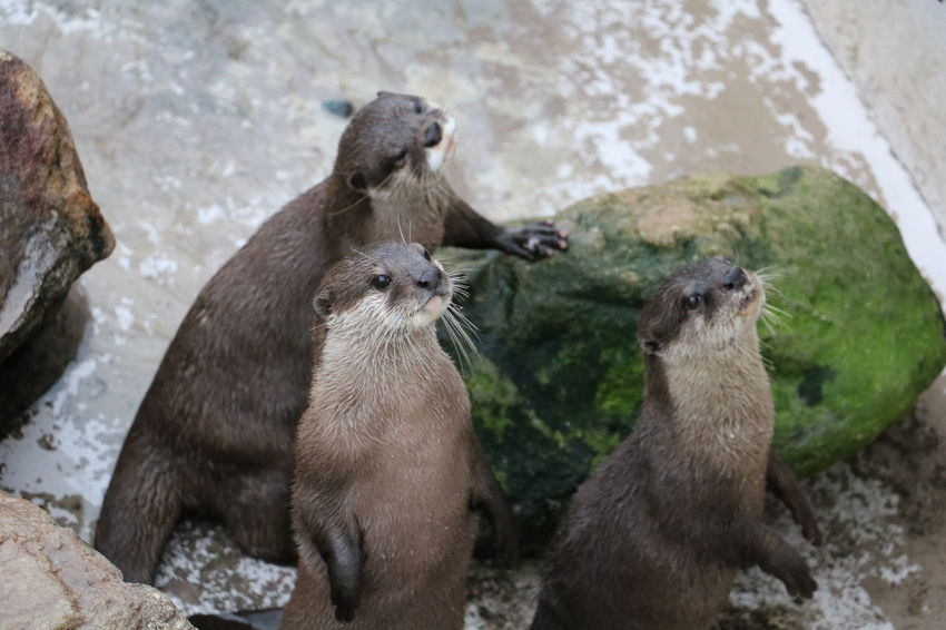 Otter ZOO-PHOTO Zoo Animal Themes No People Otters Outdoors Standing Water Zoo Animals