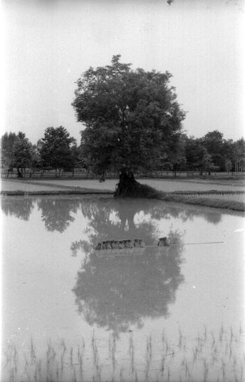 Reflection of tree in lake against sky