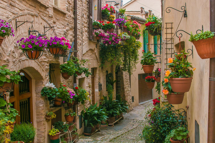 Potted plants on walls of houses in town