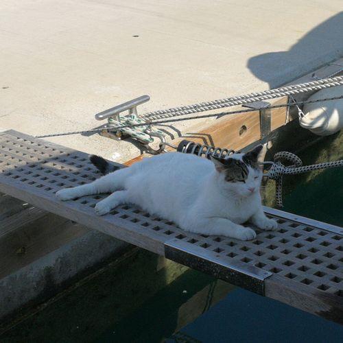 Sail cat Pets Beach Dog Domestic Cat Water Animal Themes