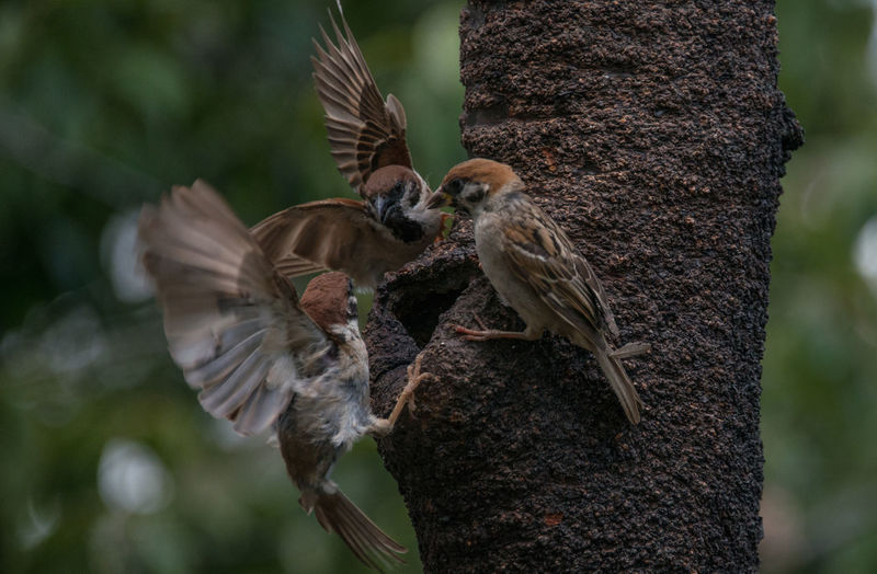 Birds Sparrow Three Sparrows かわいい小鳥 三羽の雀 自然 雀たち