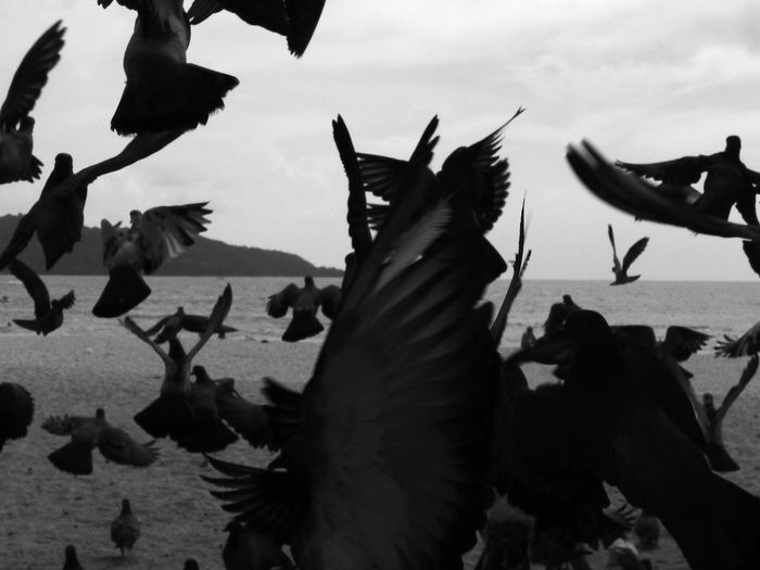 Close-up of birds flying over sea against sky