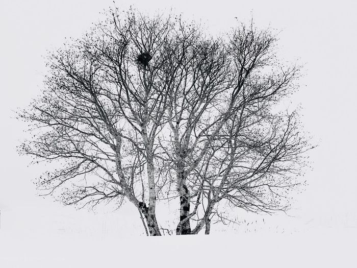 Bare Tree Winter Tree Winter Snow No People Plant Pattern Nature Sky Close-up Abstract Branch Tree White Background