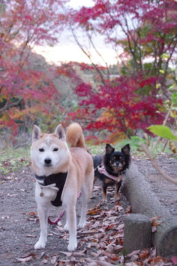 Portrait of dogs standing against plants