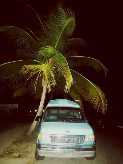 Puerto Rico Palm Tree Car Night No People Black Background Outdoors