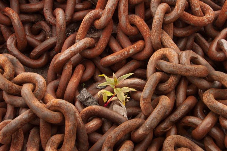 Full Frame Shot Of Rusty Chain With Plant