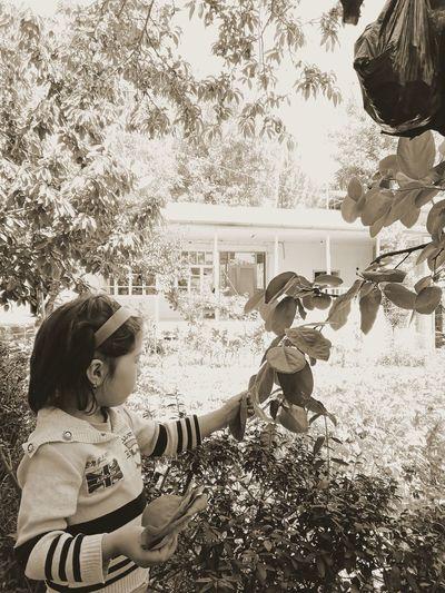 Girl looking at camera on tree