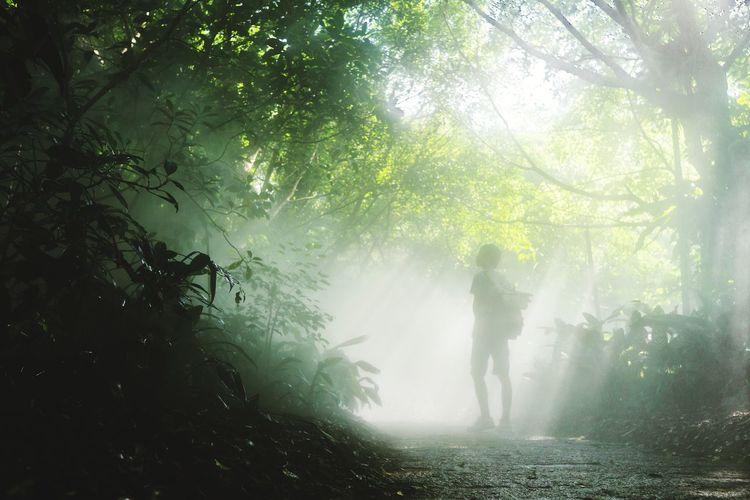 植物园 Tree Water Fog Forest