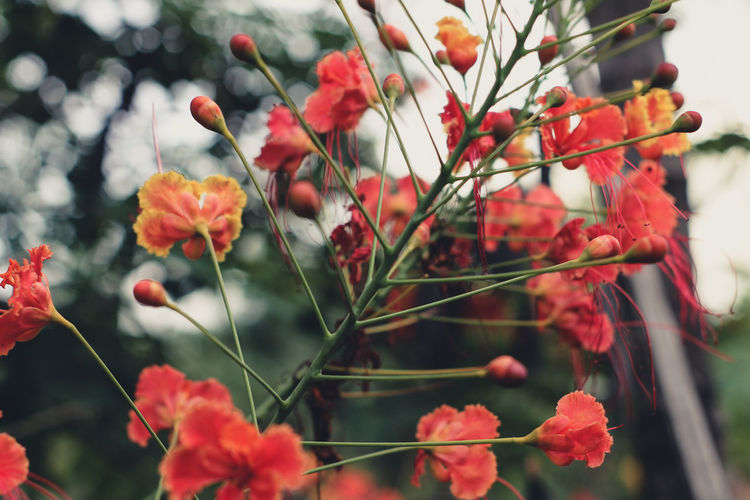 Beauty In Nature Close-up Day Flower Flower Head Flowering Plant Focus On Foreground Food Food And Drink Fragility Freshness Fruit Growth Nature No People Outdoors Plant Plant Stem Red Rowanberry Selective Focus Spring Vulnerability