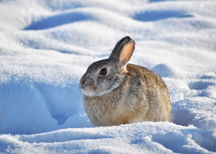 High angle view of rabbit on snowy field