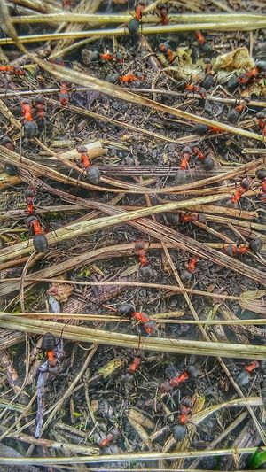 Full Frame Insects  Ants Ants Colony Outdoors No People
