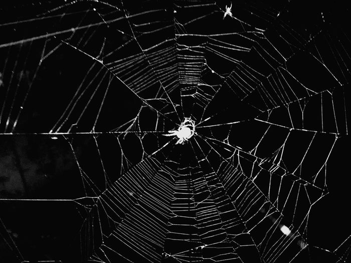 Sector Breached... 😂😂 Spideysenses Nature On Your Doorstep