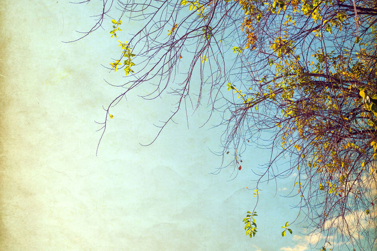 nature of vintage tree flower in summer ,paper art texture Tree Plant Branch Sky Nature No People Low Angle View Tranquility Bare Tree Beauty In Nature Day Outdoors Growth Scenics - Nature Autumn Yellow Cloud - Sky Tranquil Scene Sunlight Art Vintage Photo