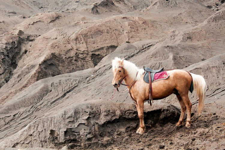 Horse standing on a land