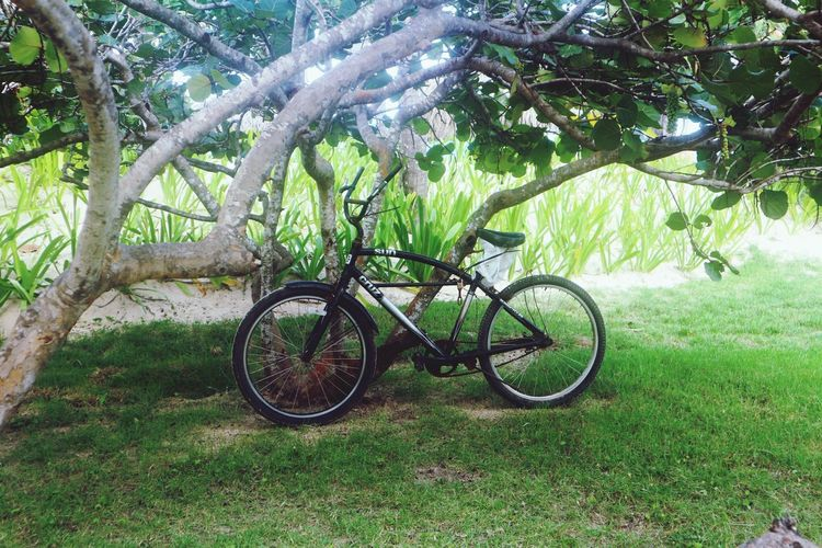 Bycicle in the tropics Tree Bicycle Tree Trunk Green Color Transportation Grass Nature Branch Land Vehicle Mode Of Transport Wheel Growth Outdoors No People Stationary Pedal Beauty In Nature Day Spoke