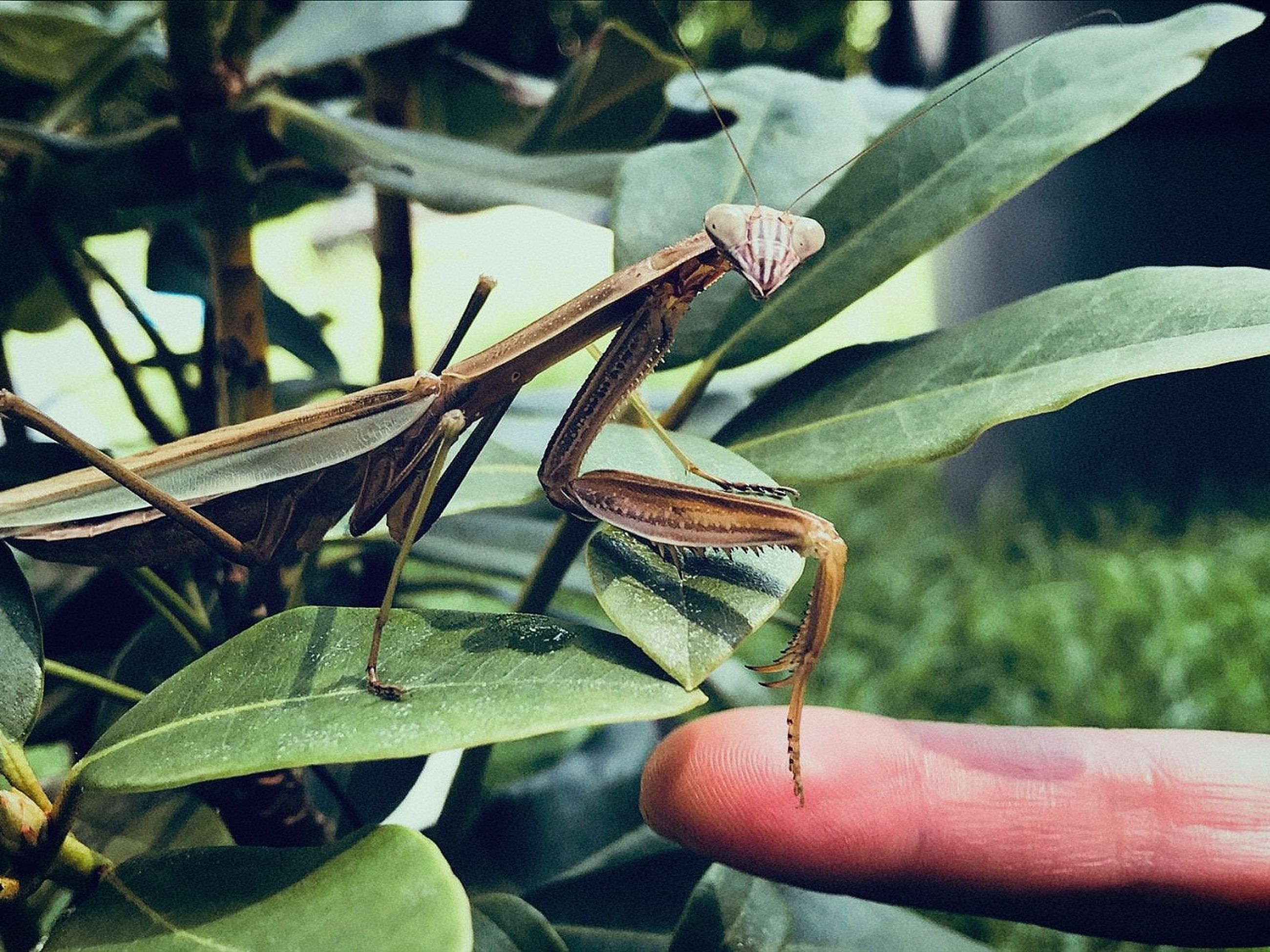 invertebrate, insect, animal, one animal, animals in the wild, animal themes, animal wildlife, hand, human hand, plant part, close-up, leaf, human body part, focus on foreground, green color, plant, day, nature, real people, finger, body part, outdoors