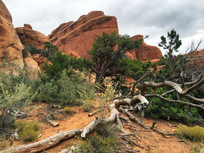 Dead trees and rock formation in forest