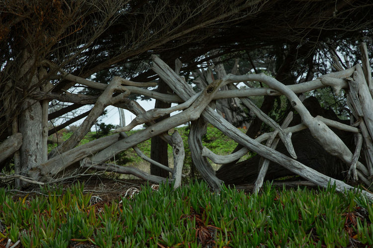 Plant Tree Grass Land Nature Growth No People Field Day Branch Root Outdoors Green Color Wood - Material Forest Plant Part Tranquility Beauty In Nature Close-up Complexity Tangled Intertwined