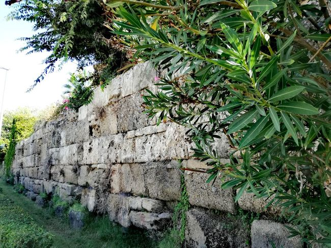 Day Outdoors No People Plant Nature Grass Growth Leaf Tree Close-up Turkey Turkish Riviera Travel Destinations Vacations Turkey♥ Summer Beauty In Nature Archeological Treasure Archeological Area