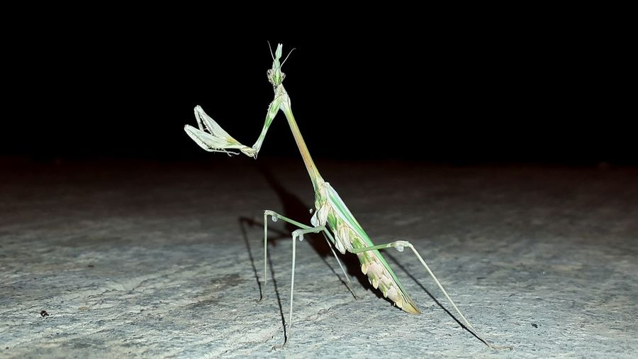 Night Guest Wildlife Enjoying Life Moment Cool Hello World Insect Hello Green