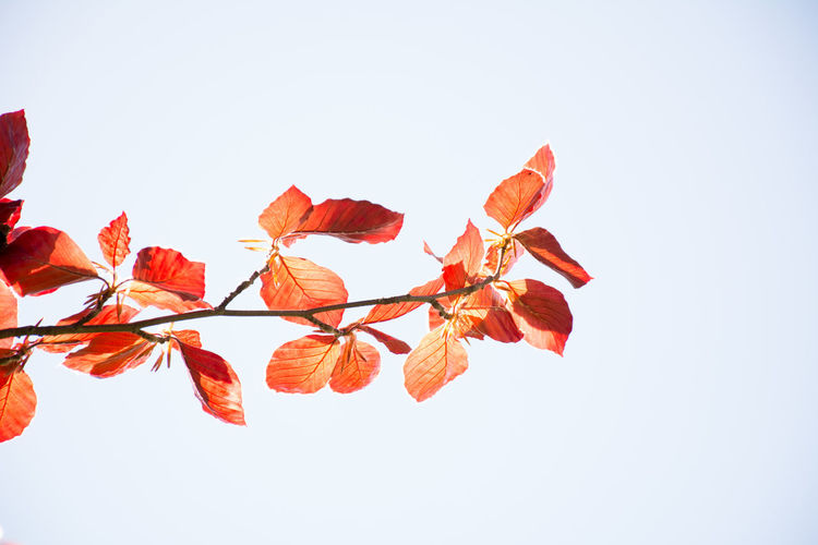 Beauty In Nature Branch Clear Sky Day Fragility Leaf Low Angle View Nature Outdoors Studio Shot White Background