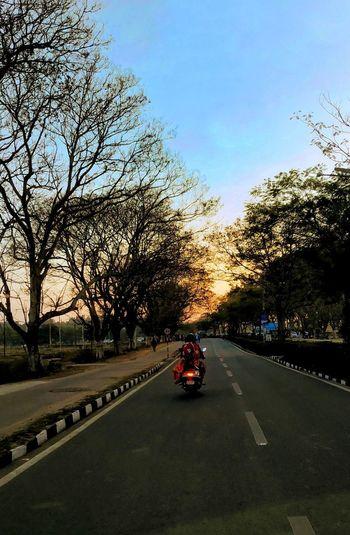 Tree Road Land
