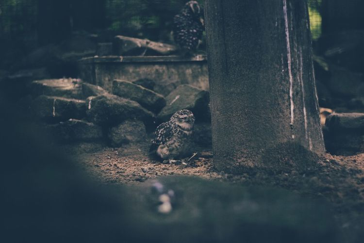 Animal Themes Animals In The Wild No People One Animal Selective Focus Stone Surface Level Tranquility Tree Tree Trunk Zoology