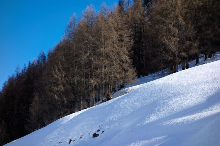 Snow Cold Temperature Winter Tree Nature Scenics - Nature Tranquility Beauty In Nature Day Tranquil Scene White Color No People Mountain Covering Sky Pine Tree Landscape Outdoors Coniferous Tree