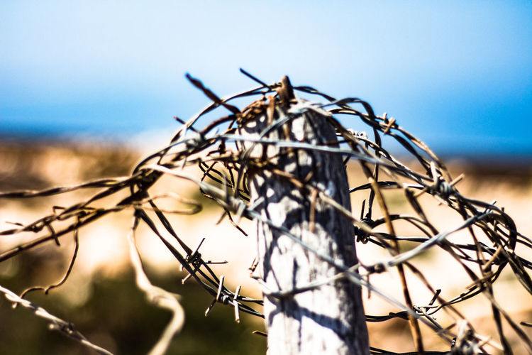Closeup Focus On Foreground No People Nature Sky Close-up Plant Day Branch Tree Outdoors Low Angle View Selective Focus Growth Sunlight Dry Fence Wire
