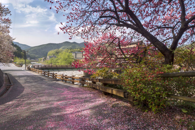 Peach blossom,River, Architecture Beauty In Nature Nature No People Plant Sky Tree Water