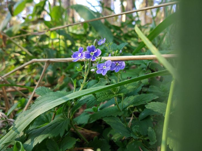 Flowering Plant Plant Flower Growth Vulnerability  Fragility Freshness Beauty In Nature Close-up Petal Plant Part Purple Leaf Green Color Nature Inflorescence Selective Focus Day Flower Head Botany No People Outdoors
