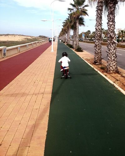 Kid riding bicycle , two color walking path red and green. Long row of Palm trees and nice blue sky's. Kid Kid Riding Bike Row Of Trees Palm Trees Blue Sky Walking Path