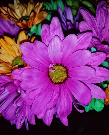 Multi Colored Colorful Flowers Bouquet Flower Head Flower Multi Colored Petal Purple Pollen Pink Color Close-up Plant In Bloom Blossom Magenta