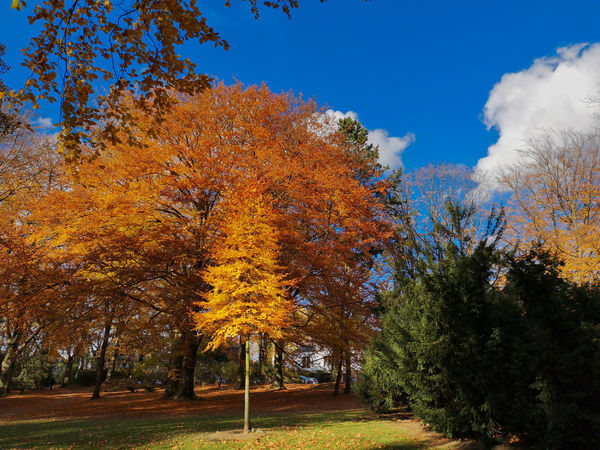 Autumn impression Tree Autumn Plant Sky Change Beauty In Nature Orange Color Nature Tranquility No People Growth Day Scenics - Nature Tranquil Scene Cloud - Sky Non-urban Scene Outdoors Land Idyllic Blue Fall Natural Condition Autumn Collection