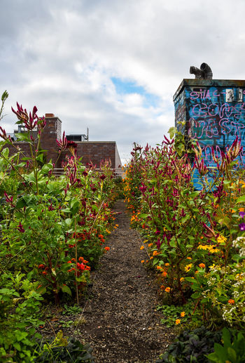 Rooftop community garden in New York City . Photo by, Cooper Billington. City Life Colors Freshness Life Lost In The Landscape Photo Photography Rooftops Sky
