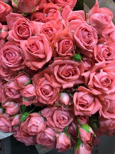 Rosé Pink Color