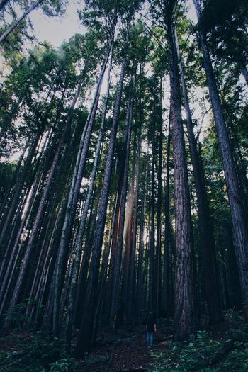 Size of life Forest Light Shining Through Tree Forest Plant Land Growth Beauty In Nature The Great Outdoors - 2018 EyeEm Awards WoodLand Tranquility Tree Trunk Tranquil Scene Trunk Nature Non-urban Scene Scenics - Nature Low Angle View Day Green Color Abundance