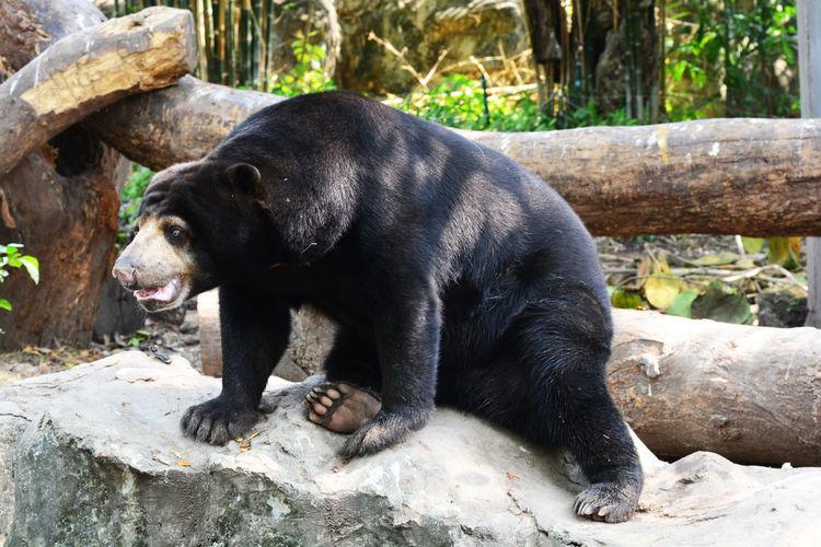 View of black animal on rock
