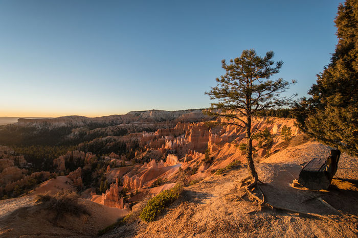 Sunrise at Bryce Canyon Beautiful Morning Bryce Canyon National Park Tree Arid Climate Beauty In Nature Beauty In Nature Bryce Canyon National Park Clear Sky Day Early Morning Hoodoos Landscape Nature No People Non-urban Scene Outdoors Scenics Sky Sunlight Sunrise Tranquil Scene Tranquility Tree