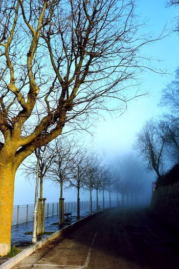 Nebbia dietro la curva. EyeEm Best Shots EyeEm Nature Lover Wintertime Winter Trees Tree Nature No People Branch Scenics Outdoors Beauty In Nature