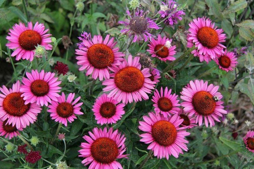 flower photo nature