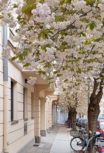 Architecture Beauty In Nature Bicycle Blossom Building Exterior Built Structure City City Life Colorful Day Flower Growth Idyllic Idyllic Scenery Nature No People Outdoors Spring Springtime Street Street Photography Tree