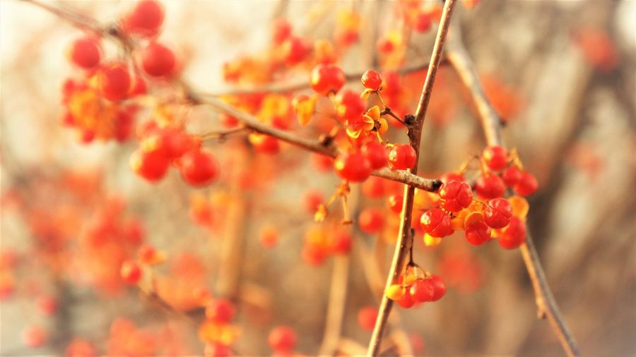 Autumn Berries Copy Space Macro Plant Fruit Food Growth Focus On Foreground Close-up Red Day Nature Freshness No People Berry Fruit Twig Beauty In Nature Outdoors Tree Branch Selective Focus Ripe Natural Condition Red Color Autumn